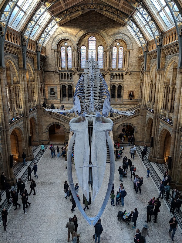 Photo de  Musée d'histoire naturelle de Londres à South Kensington